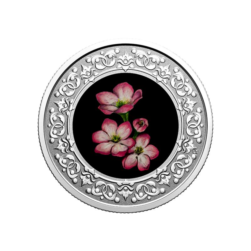 Kanada maakondade rahvuslilled - Epigaea (Mayflower). Nova Scotia. Kanada 3 $ 2020.a. värvitrükis pööratud proof kvaliteediga 99.99% hõbemünt, 7.96 g